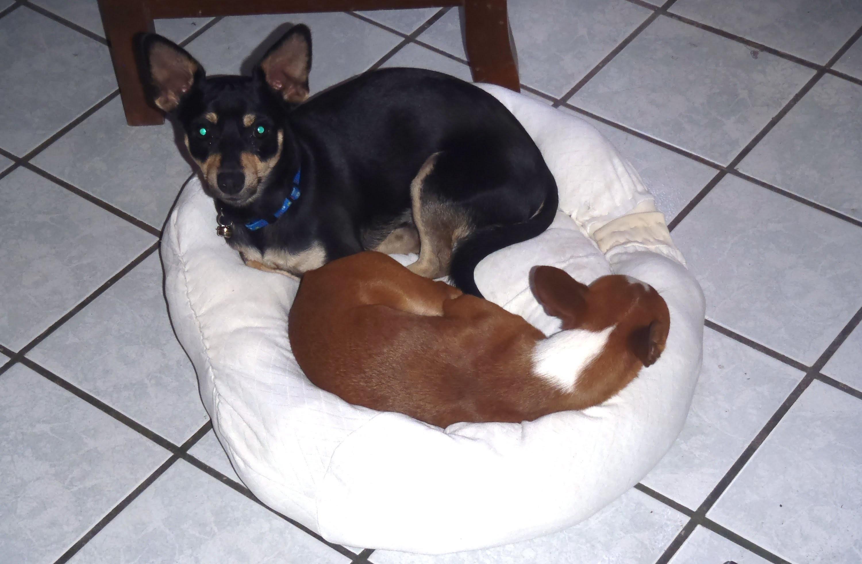 DIY Cama para mascotas con un sweater . pet bed