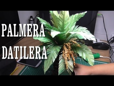 DIY PALMERA DATILERA DE TRONCO GORDO - DATE PALM, THICK TRUNK