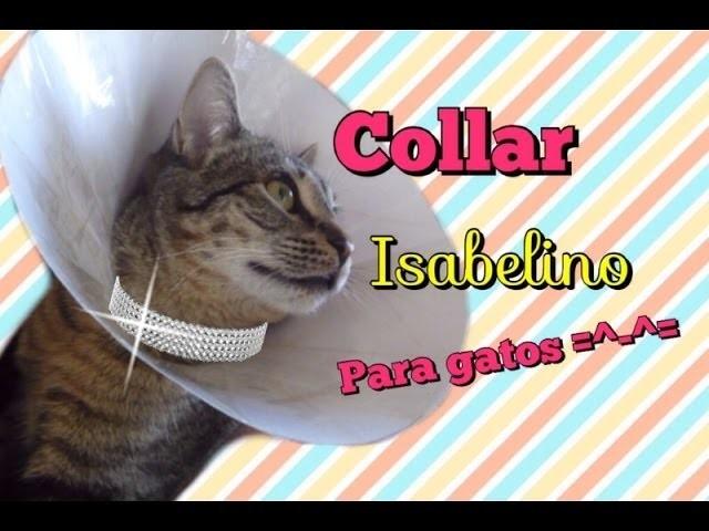 DIY Collar Isabelino para Gatos