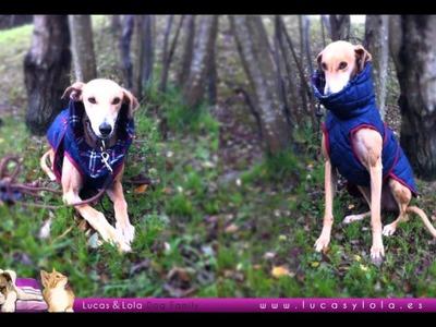 Ropa para perros. Día de vestir a mascotas. Entrevista a Lucas & Lola en Radio Mijas