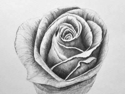 Dibujando flores: cómo dibujar una rosa a lápiz - Arte Divierte.