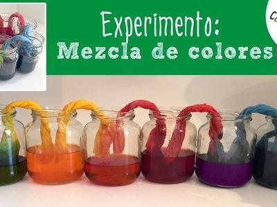 Experimentos caseros para niños: capilaridad y mezcla de colores