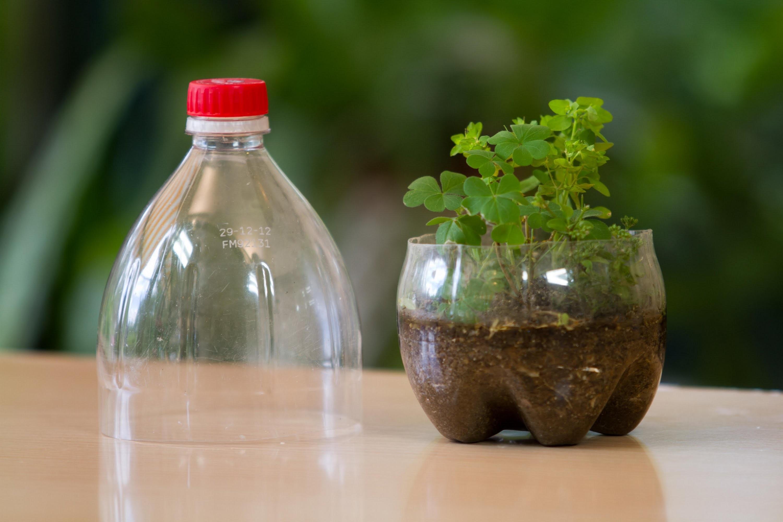 Terrarium Hecho de Botellas CocaCola Recicladas