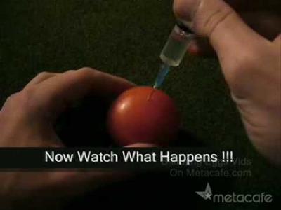 Tomate FOsfOrescente =)