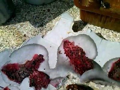 Cómo sacar semilla de fresa.