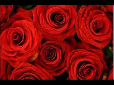 Prepara tu aceite de rosas. DIY Rose oil. EcoDaisy