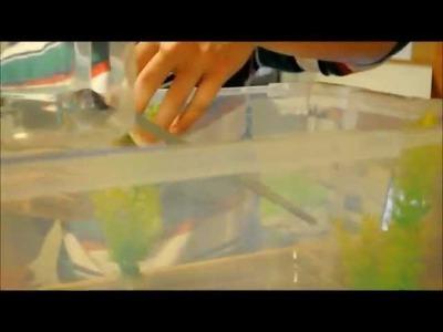 Como hacer una pecera para tortugas