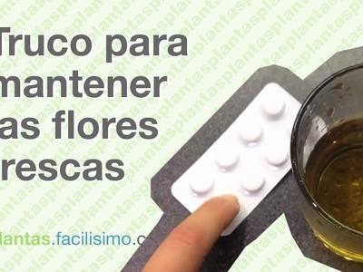 Cómo mantener más tiempo las flores frescas  | facilisimo.com
