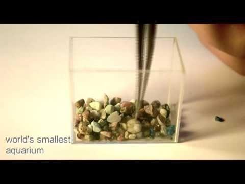El acuario más pequeño del mundo