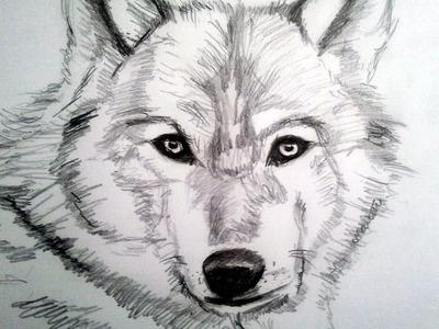Como dibujar un lobo a lapiz, paso a paso: Como dibujar animales con pelo