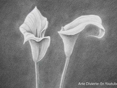 Cómo dibujar flores: un lirio de agua - Arte Divierte.