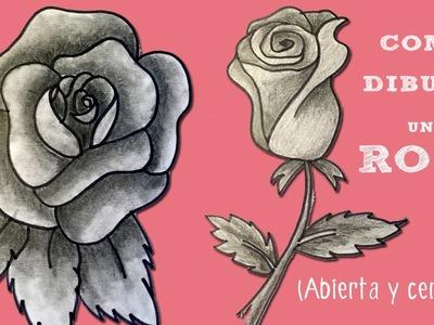 Cómo dibujar una rosa. Aprende a dibujar paso a paso.