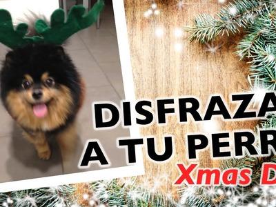 Cómo hacer un disfraz para perro | Navidad DIY