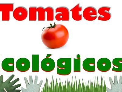 Cómo Cultivar los Tomates en un Huerto Orgánico & Tropical