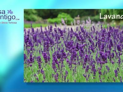 Ambientadores Naturales y Cremas de Cuerpo con Perfumes Naturales, Aromaterapia
