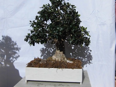 Hacer maceta para bonsai casera hecha con baldosas JM-QJ