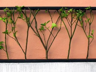 Un hermoso marco de madera con ramas de árboles