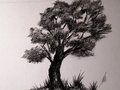 Cómo dibujar un árbol al Carboncillo, cómo dibujar árboles HD
