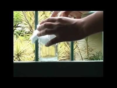 Cómo sembrar una planta de frijol