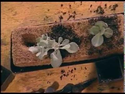 Macetas  vegetales en Fibra de Coco