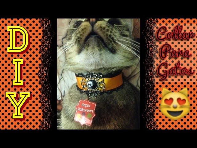 #6 DIY Collar para Gato