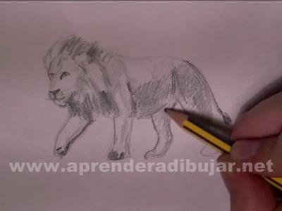 Dibujos de leones - Cómo dibujar un león a lápiz