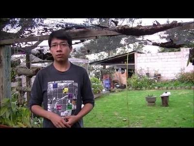 Cultivando Orquídeas Parte 6: La Ventilación