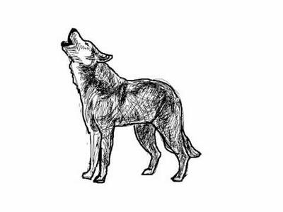 Como dibujar un lobo aullando paso a paso - Dibujos de animales