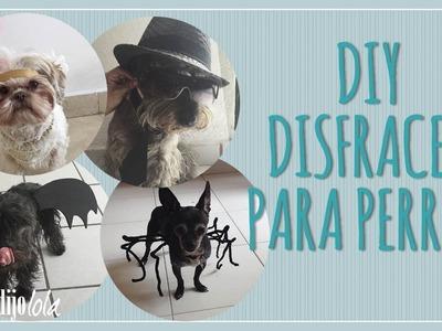 Disfraz para perro  | DIY disfraces para perros | 4 Ideas de disfraces