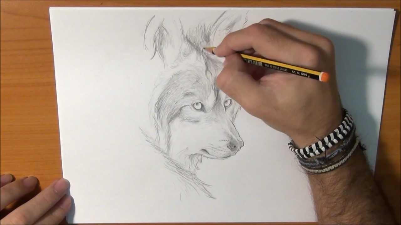 Dibujar un lobo real
