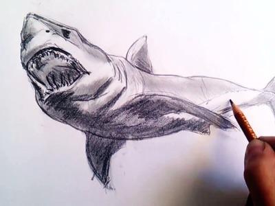 Como dibujar un tiburon a lapiz paso a paso: Tecnicas lápiz de grafito