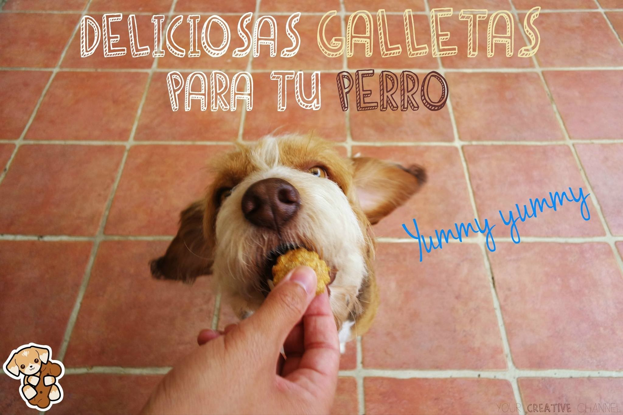 Riquísimas y saludables galletas para tu perro - Tasty and healthy dog treats