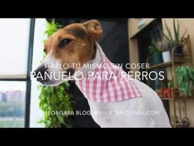 Cómo hacer un pañuelo para perro: muy fácil y sin coser