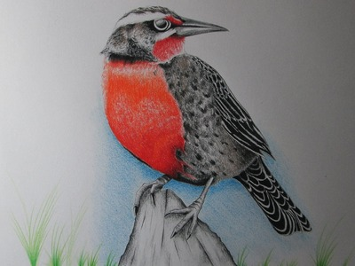 Cómo dibujar un pájaro con lápices de colores paso a paso, aprender a dibujar aves