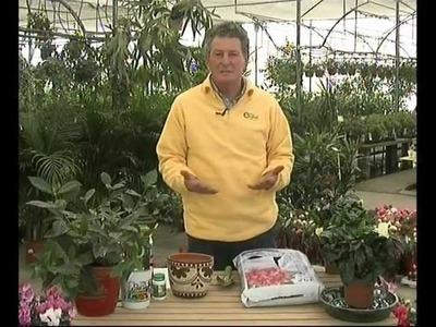 El jardinero en casa - Gardenias