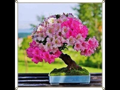 Como crear y cuidar un bonsai parte 3