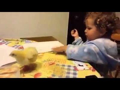 Video gracioso niño y su pollito