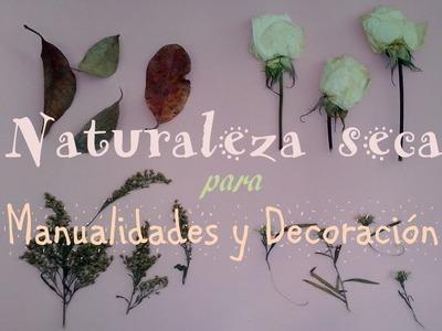 Como hacer Naturaleza Seca | DIY  | LuppiCoCo