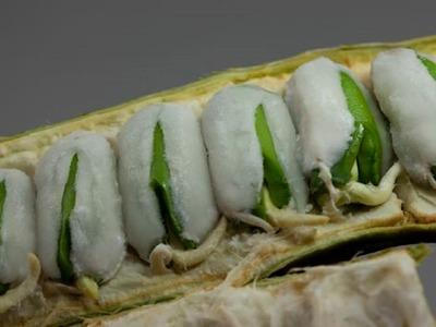 6 frutas de México que casi nadie conoce