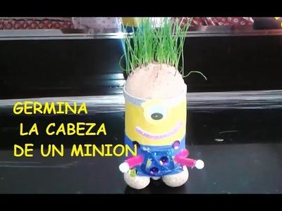 COMO GERMINAR  MINIONS CABEZAS DE PASTO