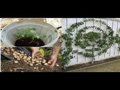 Grandes secretos y trucos de jardinería que te apuesto no conoces PARTE 3