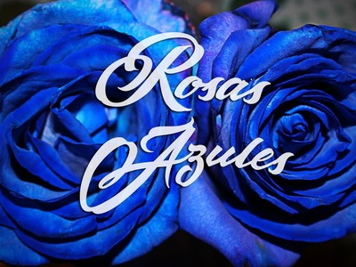 Como hacer ROSAS AZULES - DIY