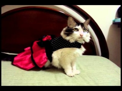 Ropa para perros y gatos. Costumes for dogs and cats