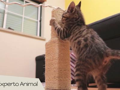 Rascador para gatos casero - Manualidades para mascotas