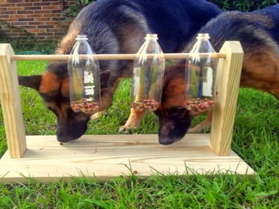 Entrena la mente de tu perro con este sencillo juguete.