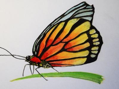 Como Pintar con Acuarela paso a paso ( Mariposa )