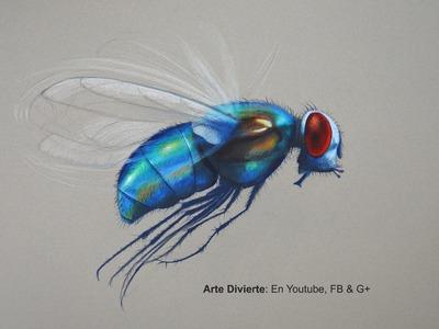 Cómo dibujar una mosca con lápices de colores - Arte Divierte.