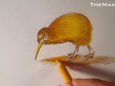 Dibujo de un Kiwi, cómo dibujar aves HD