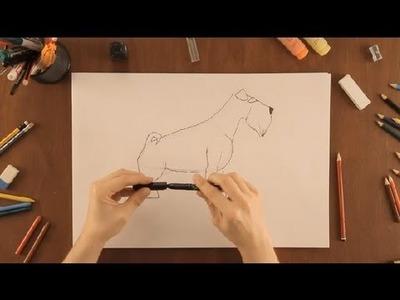 Cómo dibujar un Schnauzer : Dibujos de la Naturaleza