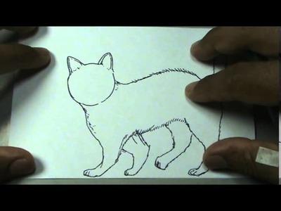 Dibujos de animales 3.8 - Cómo dibujar un gato-  cat drawing